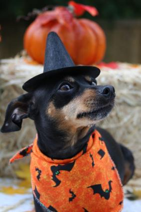 Canine Halloween Party