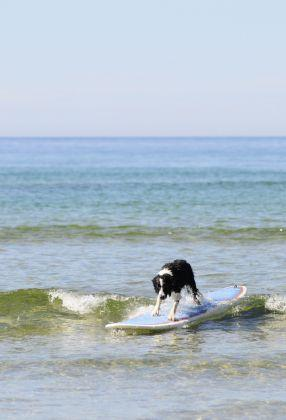 Hunde Surf for Charity